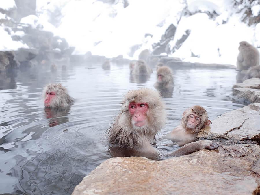 猿と温泉に入ってるイメージ