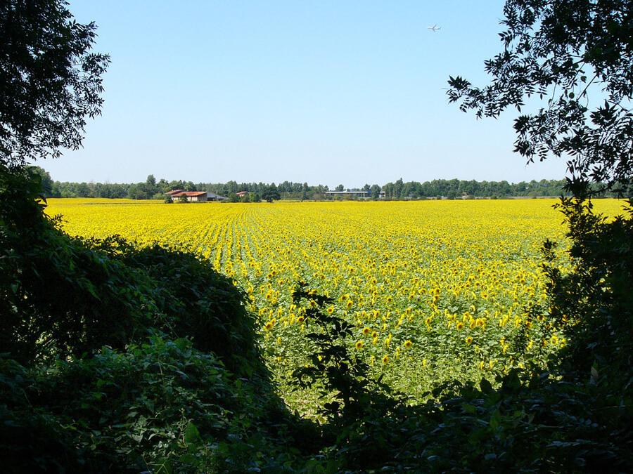 ヴァランソールのひまわり畑