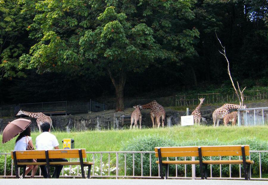 動物園 イメージ