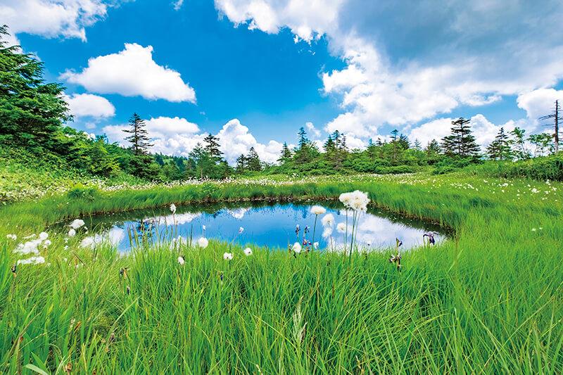 芳ヶ平湿地群