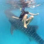 サメに触らないことが困難?!フィリピンのセブ島でジンベエザメと触れ合おう!
