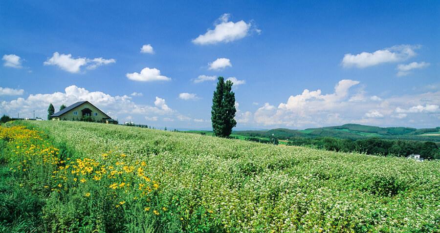 北海道景色イメージ