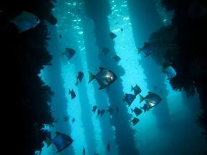 ダイビングで見られる海の中