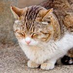 猫が支配する島?福岡の猫島「相島」
