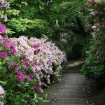 日常を忘れてゆっくり歩こう♪癒されたい女子にオススメ。鎌倉のイチオシお散歩コースを教えます