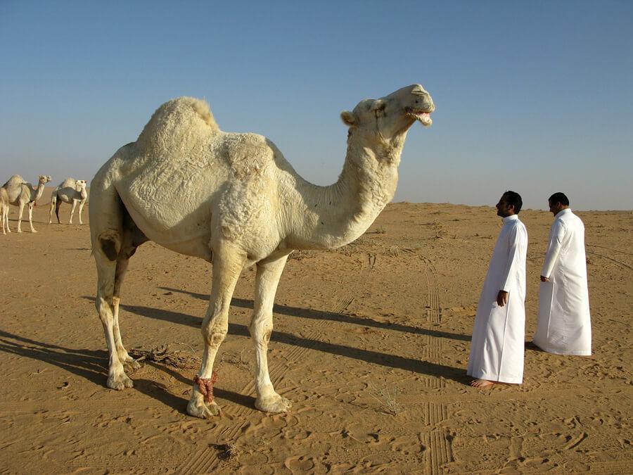 サウジアラビア01
