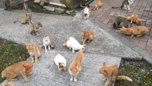 青島の猫達