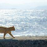 【ネコ】たくさんの猫と触れ合える江ノ島の有名スポット、「聖天島公園」に出かけてみませんか?