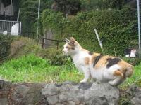 しっぽの丸い猫