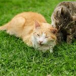 【ネコ】島には猫神様を祀る「猫神社」が!宮城県の田代島で猫と戯れる旅を楽しもう♪