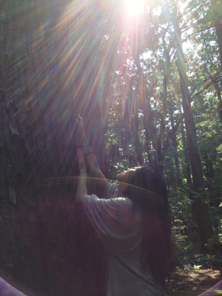 杉の木からパワーをもらう