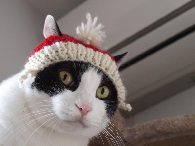 猫用手編みニット