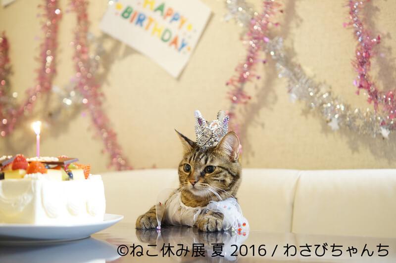 わさびちゃんち(誕生日会)