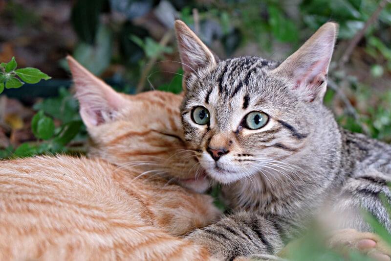 【ネコ】猫旅と夏のレジャーを同時に楽しめる!?福岡県「能古島」で贅沢な旅を満喫しませんか?