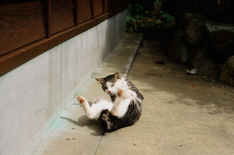 加唐島の猫
