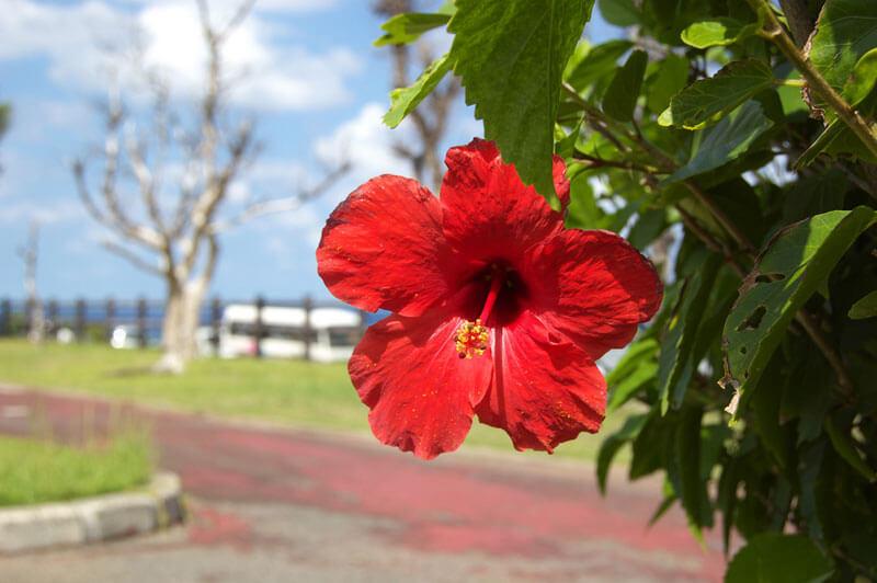 奄美大島と花