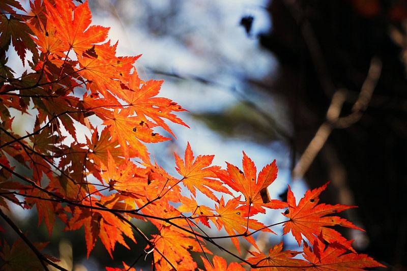 そろそろ埋まりはじめてる!京都ではんなり紅葉狩りを楽しむなら、今から人気の宿を押さえておくのがベストです!