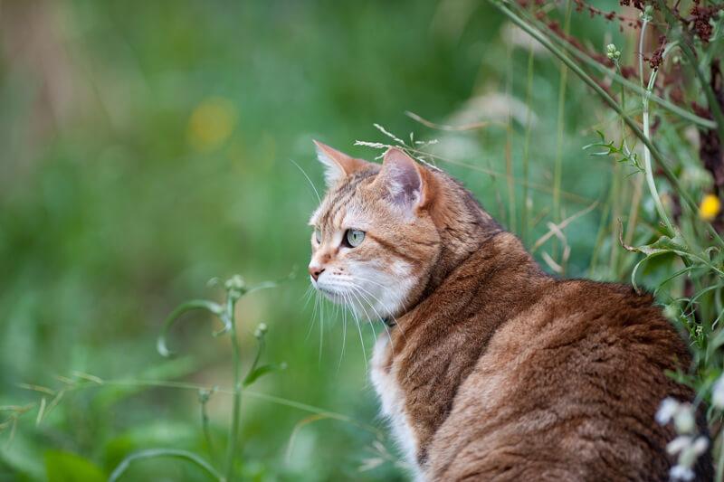 メディアで話題沸騰の「猫寺」!福井県にある「御誕生寺」で猫達と楽しい時間を過ごしてみませんか?