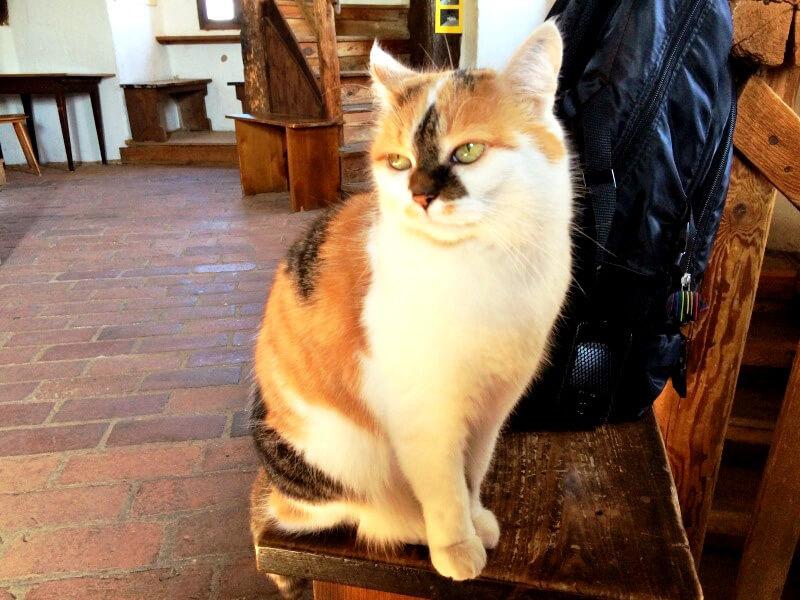 猫の職員さん