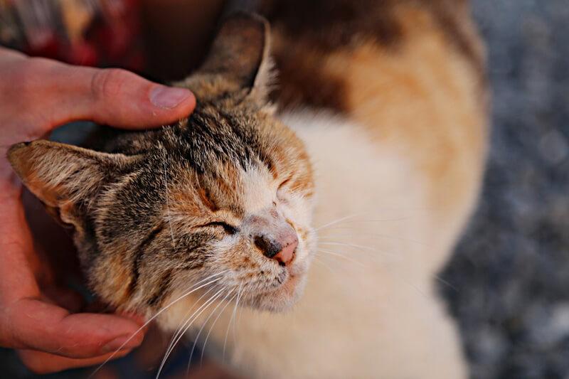 長閑な風景とのんびり猫達。大自然を満喫できる山口県「平郡島」で癒しの一時を。