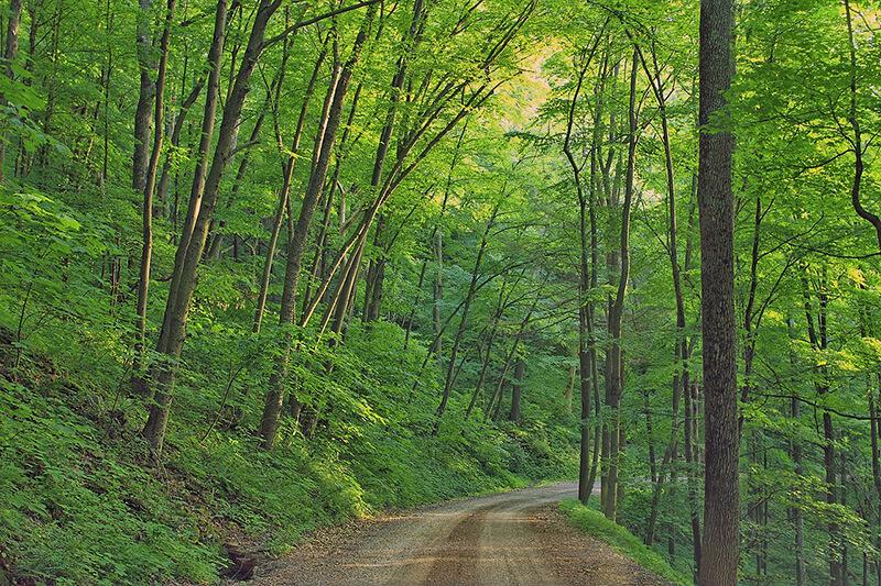 秋はいっぱい歩こう!「森林浴の森日本100選」にも選ばれた関東近郊のおすすめ森林浴スポット4選♪