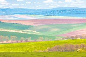 鮮やかなモラヴィア大草原