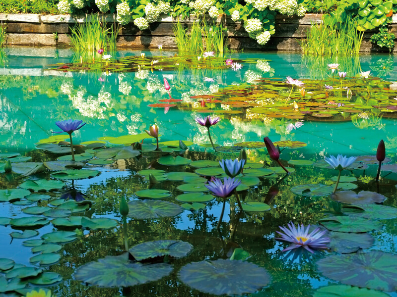 大塚国際美術館 モネの池