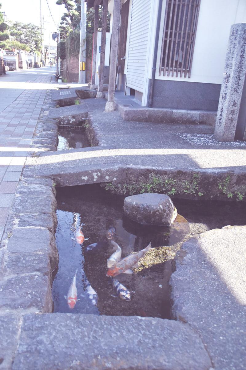島原・鯉の泳ぐ街
