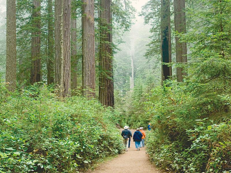 レッドウッド国立公園 トレイル