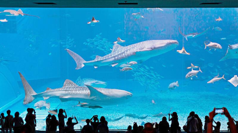 美ら海水族館、巨大アクリルパネル