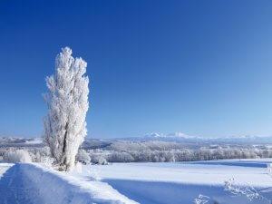 霧氷をまとったケンとメリーの木