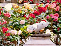 富士花鳥園 フクロウ