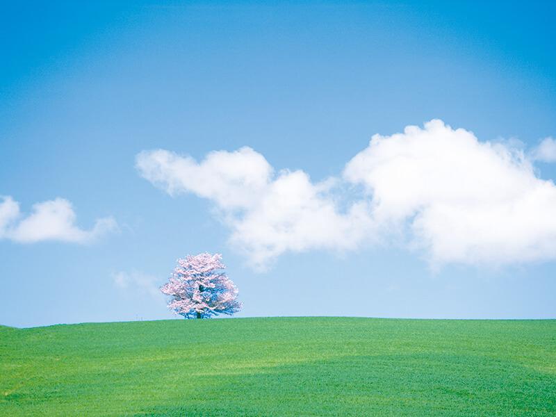 爽やかな富良野の平原