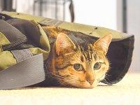 猫キャリーバッグ2