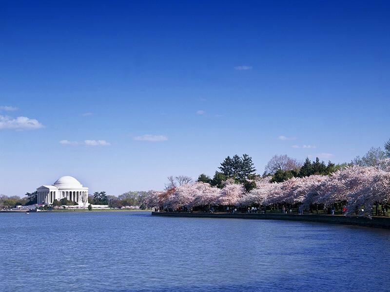 ワシントンタイダルベイスンの桜