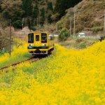 春の季節がおすすめ!千葉・南房総のローカル線「いすみ鉄道」に乗ってみよう!