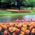 春ですね♪ポカポカ陽気に出掛けたい関東のチューリップの名所3選