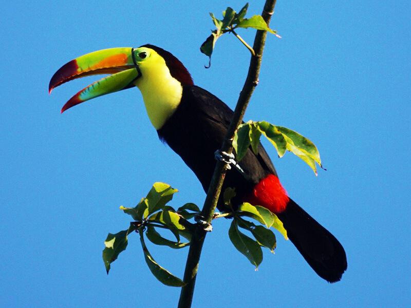 南国特有の鳥
