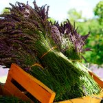 日帰りで行ける癒しのスポット メディカルハーブガーデン「生活の木 薬香草園」