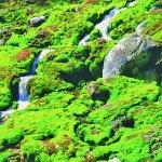 天然のグリーンカーペット!?チャツボミゴケ公園はかなり珍しいスポットだった!