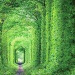 世界一ロマンチックなスポット「愛のトンネル」に今年こそ行ってみたい!