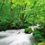 インスタ映えする絶景写真が撮れるスポット!青森県「奥入瀬渓流」の魅力をご紹介