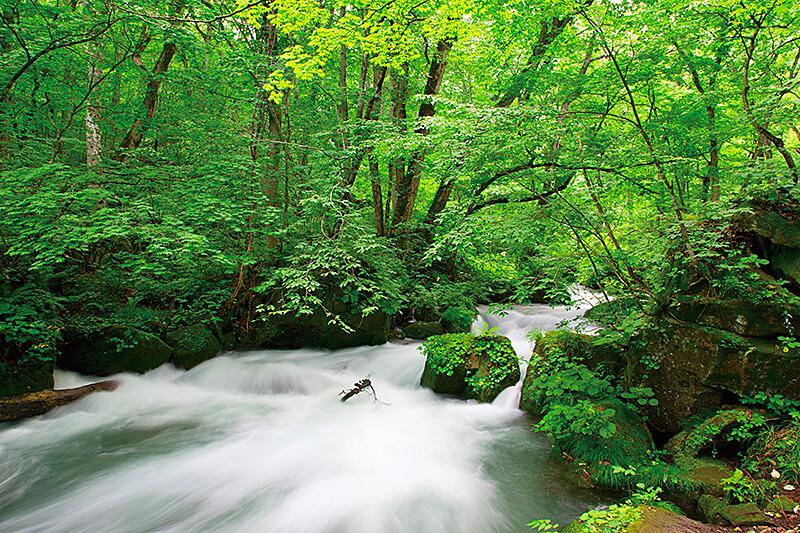 「奥入瀬渓流」が本当に綺麗…インスタ映えする青森県の絶景観光スポットはここ♪