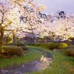 知ってました?金沢の兼六園は桜の季節に「無料開放」なんですよ♪
