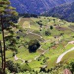 今おすすめの絶景!岐阜の山中に広がる「天空の茶畑」がペルーのマチュピチュみたい!