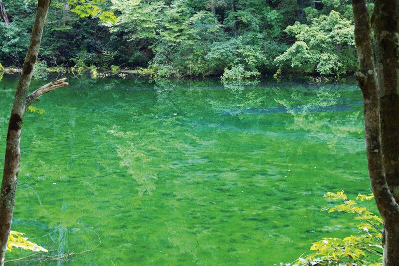 透明度抜群で綺麗すぎ!新潟県津南町の秘境池「龍ヶ窪」に行ってみたい!