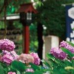 雨の日も癒される♪とっても綺麗な紫陽花に出合える関東の名所3選