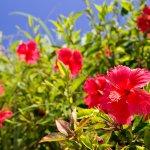 那覇空港のすぐそばで島リゾート気分♪ 瀬長島の「ウミカジテラス」が素敵すぎる♡