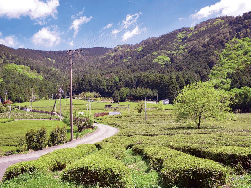 天空の茶畑 展望ポイント