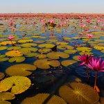 次見に行く絶景はココに決まりだね♡赤の睡蓮の花が広がるタレーブアーデンが美しすぎ♪